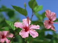 沖縄,出張マッサージ,アロマ 【アロケア・ビー】